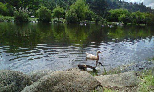 Animales que habitan un estanque natural