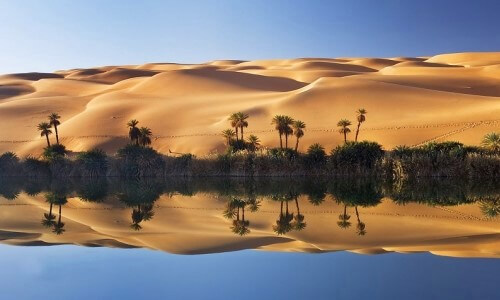 oasis características