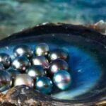 cómo se hacen las perlas