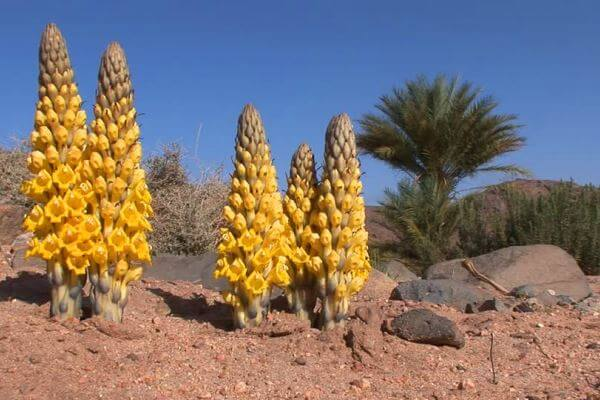 vegetación desierto sahara