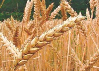características de la hibridación de cultivos