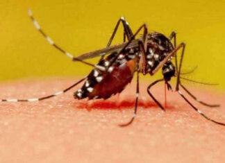 por qué pican los mosquitos explicación científica