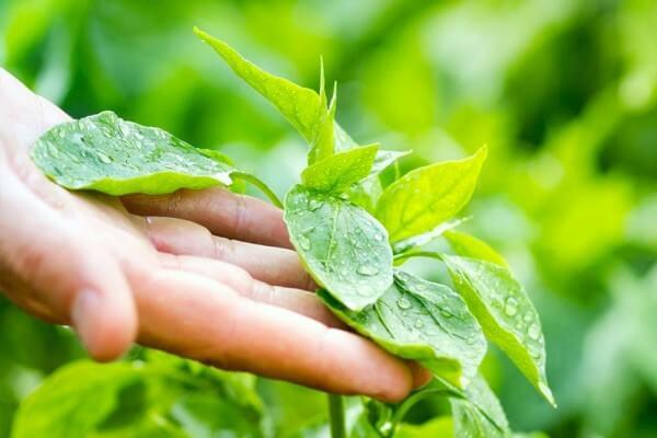plantas características y partes