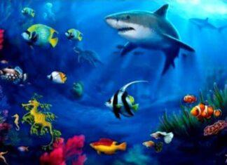 animales acuáticos características