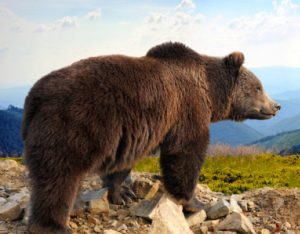 ¿Cuántos tipos de animales terrestres hay en el mundo?