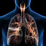 cómo funciona la respiración