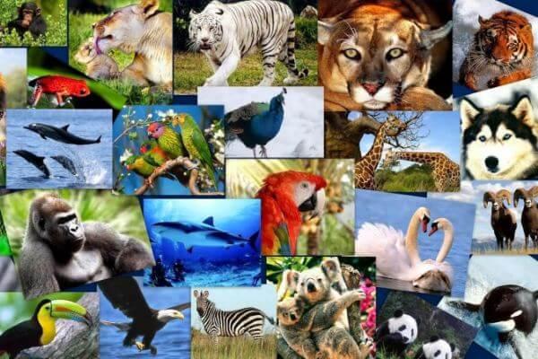 qué es un animal para niños