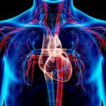 sistema circulatorio características