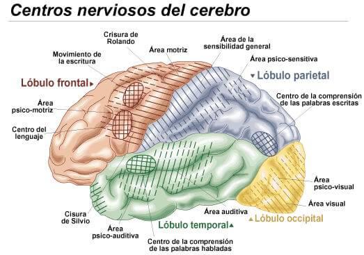 qué son los centros nerviosos