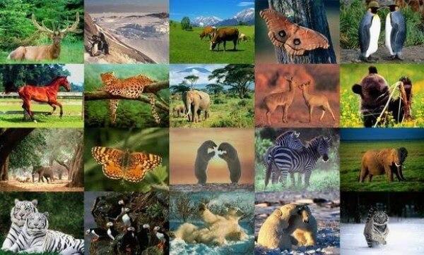 ¿Cuáles son los animales terrestres para niños?