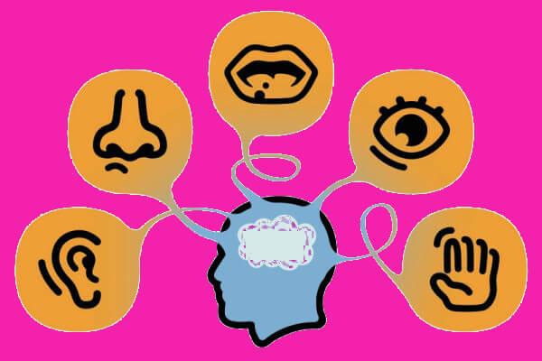 los cinco sentidos y sus partes