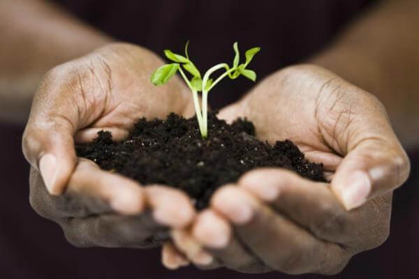 hábitats de las plantas terrestres