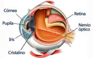 cómo funciona el sentido de la vista