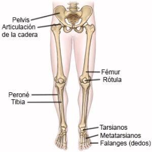nombre de los huesos de la pierna y el pie