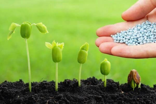 cómo se alimentan las plantas