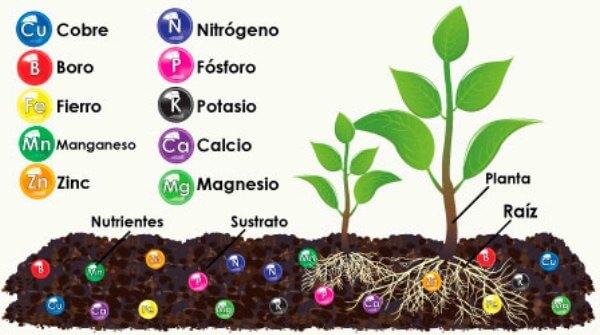 qué minerales necesitan las plantas