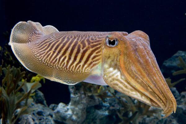 moluscos características