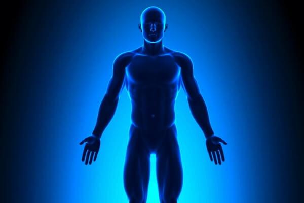 cuáles son las partes del cuerpo humano