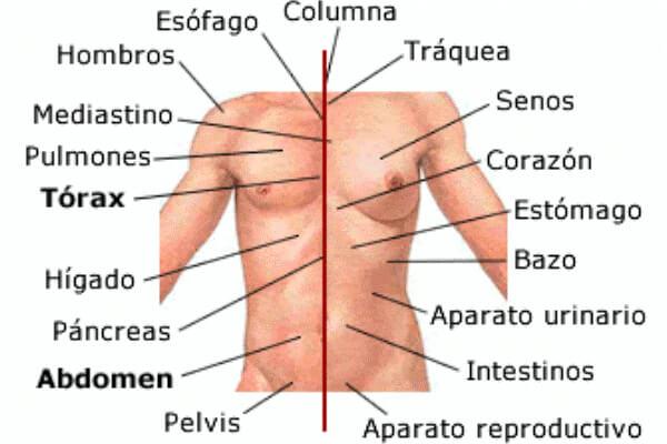 partes del tronco del hombre y la mujer