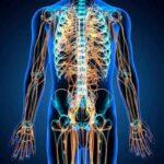 sistema nerviosos partes