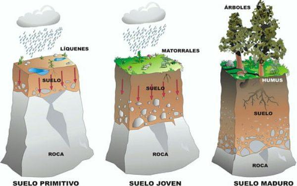 diferentes tipos de suelos