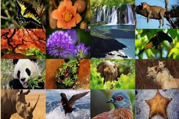 por qué existe la dispersión de los seres vivos