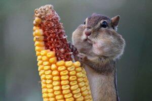 qué comen los animales