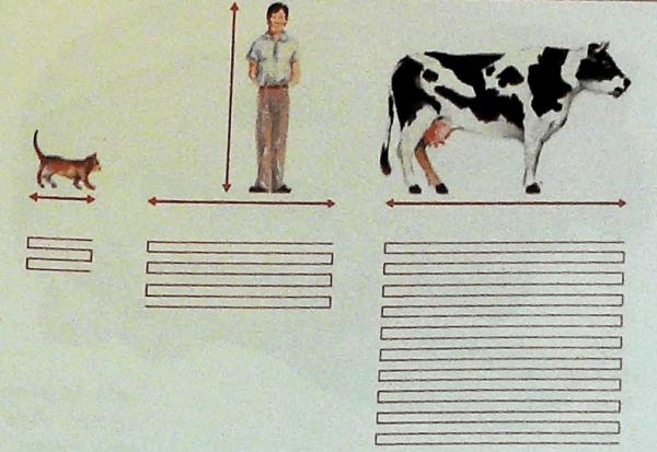 características aparato digestivo animales