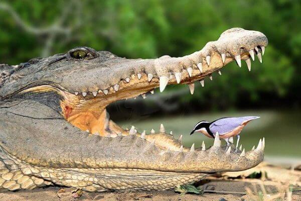 relaciones colaborativas entre seres vivos