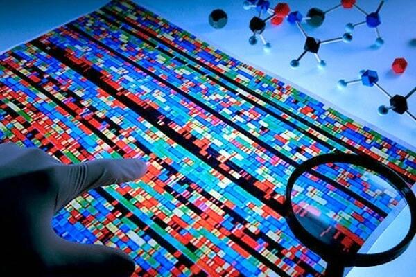 identificación genéticas por extracción ADN características