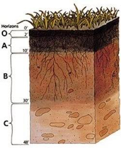 ¿Qué es el suelo y sus partes?
