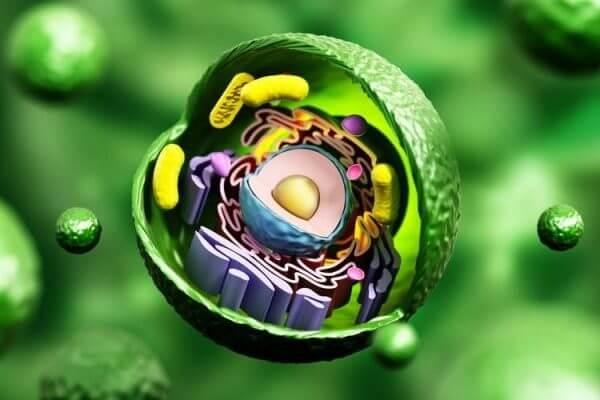 célula características