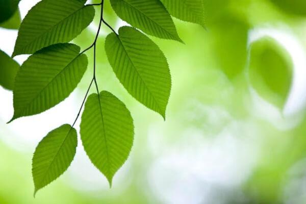 propiedades de las hojas