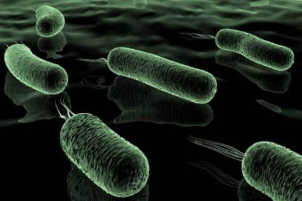 bacterias características